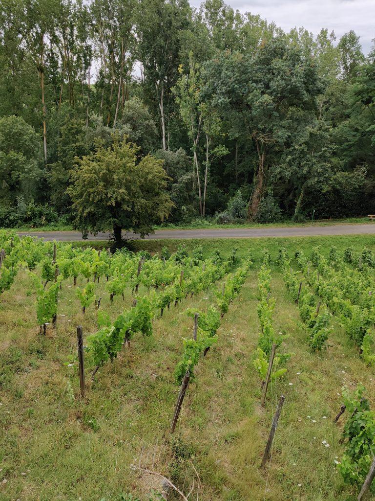 Les vins de la Loire - Les vignes du domaine Belargus – Livraison de vins d'exception à domicile