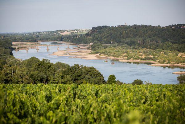 A la découverte des vins de la Loire avec Jean-Luc Jamrozik