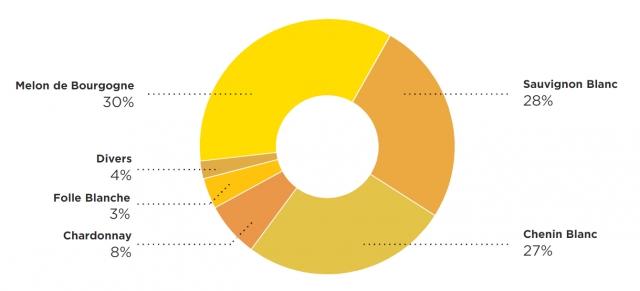 Les vins de la Loire - pourcentage des vins blanc - Livraison de vins d'exception à domicile