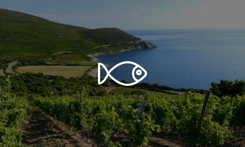 Accords poisson et vin - Livraison de vins d'exception à domicile
