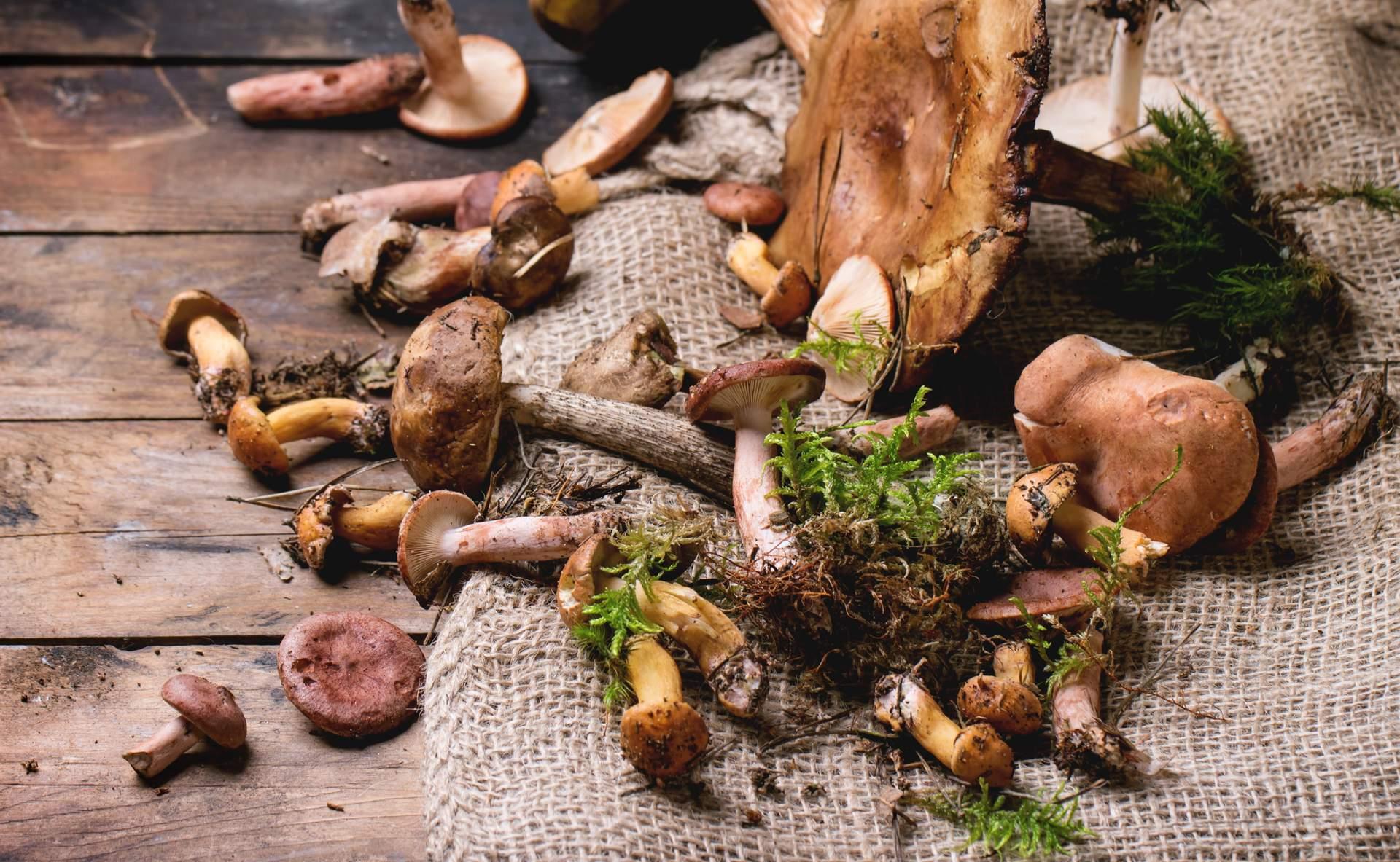Nos accords champignons et vins