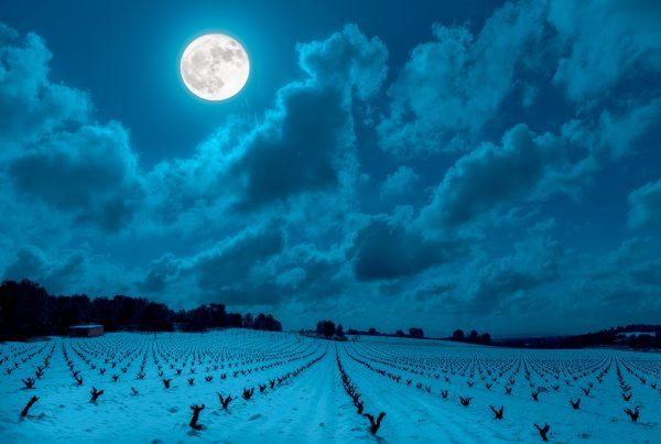 Vins-Bio-en-Biodynamie-et-nature - Lune-et-vigne- D-or-et-de-vins