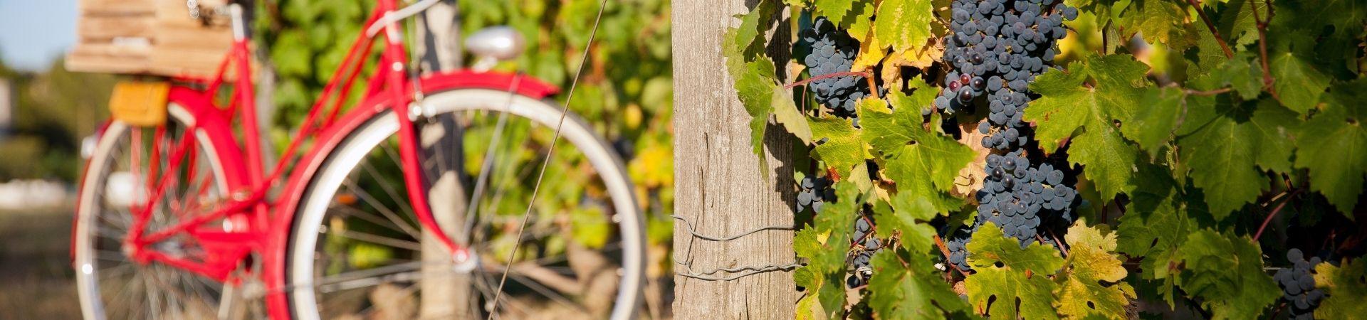 Le vin Bio, où en est-on ?