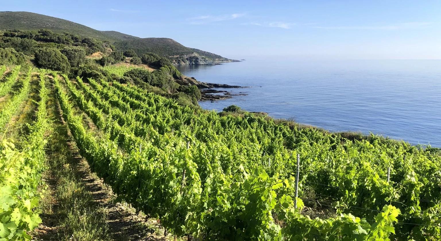 Sur la route du vin corse : escale au Cap